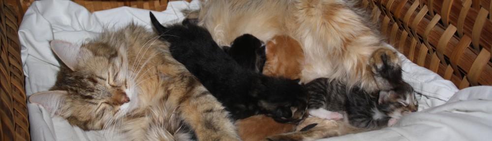 Kattungarna 20111126 003